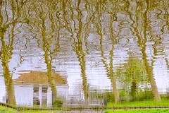 Water (mirsavio) Tags: trees holland green water lines reflections curves edam colorefexpro