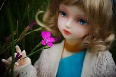 . (saskia_chi) Tags: soom serin little msd mermaid sammer doll bjd blue