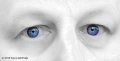 In your eyes... (Trevdog67) Tags: petergabriel so inyoureyes bjork hunter morphing polarbear blue eyes white skin composition man caucasian nikon d7100 nikkor 18300mm wu1a morph