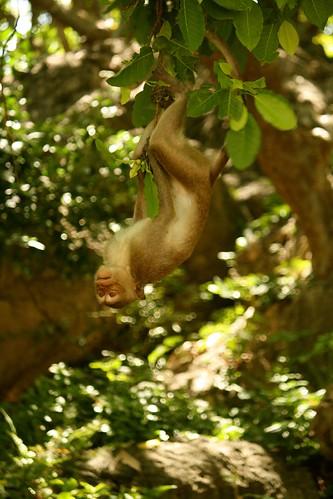 el más mono rey del swing