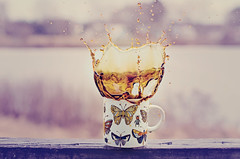 Epic Coffee Splash (HugsNotDrugs11385) Tags: butterfly butterflies bugs mug splash splashphotography coffeesplash