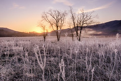 Frosty Spring Morning in the Cove (Appalachian Hiker) Tags: fog sunrise easter dawn spring frost meadow smokies greatsmokymountains cadescove gsmnp