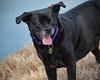 Happy (gtncats) Tags: dog pet happy loved rescued newlife newchance photographyforrecreation infinitexposure foreverlovinghome