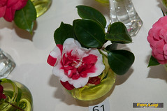 "Udruga ljubitelja kamelija, Izložba kamelija 2015, Dodjela nagrada • <a style=""font-size:0.8em;"" href=""http://www.flickr.com/photos/101598051@N08/16710193498/"" target=""_blank"">View on Flickr</a>"