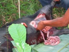 Bull's Innards at Funeral