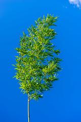 Bamboo (deyveone) Tags: blue sky green hawaii himmel maui bamboo grn blau bambus