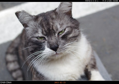IMGP3072 (erichchen) Tags: cat