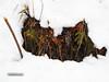 Life in cold (Minahil Ahmad) Tags: pakistan snow plant photography photos theme shogran onone on1