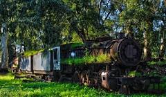 """Blooming"" train... (Michael Kalognomos) Tags: old station train rust rail abandonment hdr blooming argos flowered traingraveyard canoneos1100d trainsanctuary"