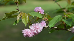 Pink Decorations ~ EXPLORE!  Thank You!!! (BKHagar *Kim*) Tags: flowers nature ga garden georgia blossoms blooms donalsonville bkhagar jackiefiveash