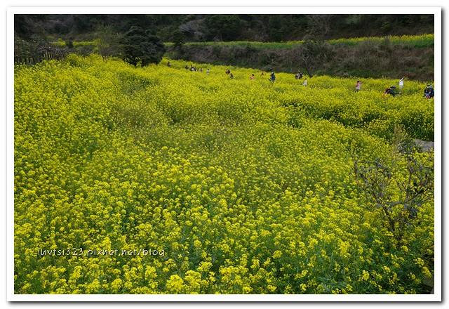 사귀포유체꽃축제38