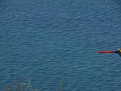 hula hoop sat 038 (Learn, Love, Conserve) Tags: hulahoop saprissa puntaleona feriaverdearanjuez