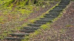 z (Birgit F) Tags: park norway lensbaby norge moss spring kristiansand vår selectivefocus mose vestagder ravnedalen edge80