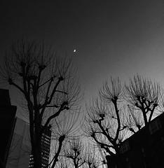 Juxtaposition ([*L*]) Tags: trees moon black london silhouette architecture night buildings dark noir crescent juxtaposition urbanlandscape