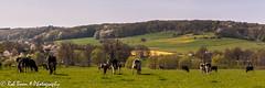 20150424_2373_Mechelen (Rob_Boon) Tags: netherlands landscape spring nederland lente mechelen limburg landschap heuvelland zuidlimburg robboon