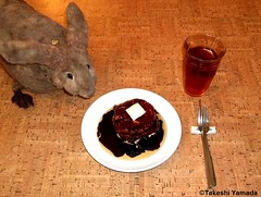 Seara (sea rabbit).  Photograph by Dr. Takeshi Yamada. 20120513 035- Sandwich Rolls with Sesame Seeds with Maple Syrup, Choco Syrup & Margarine. Black Tea (diningwithsearabbits03) Tags: ny newyork sexy celebrity art hat fashion animal brooklyn painting asian coneyisland japanese star costume tv google king artist dragon god cosplay manhattan wildlife famous gothic goth performance pop taxidermy cnn tuxedo bikini tophat unitednations playboy entertainer takeshi samurai genius mermaid amc mardigras salvadordali unicorn billclinton billgates aol vangogh curiosities sideshow jeffkoons globalwarming takashimurakami pablopicasso steampunk yamada damienhirst cryptozoology freakshow barackobama seara immortalized takeshiyamada museumofworldwonders roguetaxidermy searabbit ladygaga climategate minnesotaassociationofroguetaxidermists