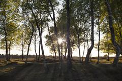 Rays (KayJansen) Tags: light sunset field canon mark ii 5d rays depth brabant lightrays noordbrabant noord nex 3n landhorst