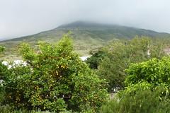 Grten am verhllten Vulkan , NGIDn730353137 (naturgucker.de) Tags: stromboli naturguckerde ckarlheinzfuldner ngidn730353137
