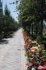 Dushanbe - Choikhona Kokhi Navruz Gardens (jrozwado) Tags: flower asia tajikistan dushanbe teahouse