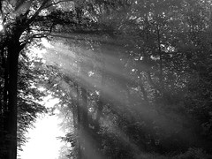 2016-05-13 Secret wood (55)light (april-mo) Tags: wood trees light mist lumire arbres bois treesinmist