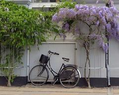Framed Copenhagen transporter (Anna's 50) Tags: bike trees street canong1x powershotg1x g1x canonpowershot canon compact