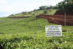 Chemicals Not allowed (My photos live here) Tags: africa canon eos tea fort farm plantation portal uganda 1000d