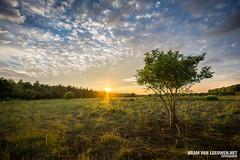Sunset @ Broekpolder, Maasland/Vlaardingen (Bram van Leeuwen.net   Fotografie) Tags: nature landscape natuur vlaardingen maasland broekpolder landschapfotografie bramvanleeuwen deruigte bramvanleeuwennet natuurgebiedderuigte