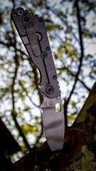 Strider SMF (Christian He) Tags: green canon outdoor ghost natur stripe messer wald folder baum cutter strider schrfentiefe smf klinge 24105l g10 taschenmesser 80d klappmesser