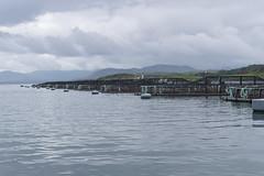 Une ferme d'élevage de saumons