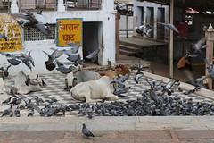 Ghats - Pushkar Lake - Rajasthan - India (raffaele pagani) Tags: india lake canon pushkar rajasthan ghat sacredwater sacredlake