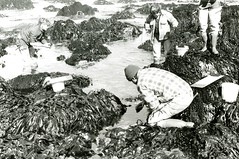 Four students work in tide pools (PUC Special Collections) Tags: california coastal mendocino 1960s norcal 1970s biology tidepools puc albion estuaries mendocinocounty pacificunioncollege albionfieldstation albionbiologicalfieldstation pucbiologydepartment