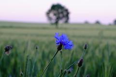 (ds325) Tags: polska poland wiosna spring