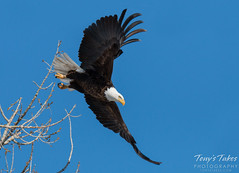 Bald Eagle launch sequence - 5 of 8