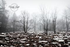 The Ice Field (socalgal_64) Tags: trees winter snow cold ice rain weather fog pennsylvania foggy atmosphere pa fields lehighvalley icefield orefield carolynlandi