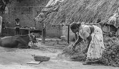 My Work (AnitaSathiam) Tags: poverty life old travel family friends light people bw woman love field festival lady rural work photography healthy eyes education worship village open place expression indian traditional ngc joy innocent daughter mother culture happiness visit clean cpc national independent wife expressive click potrait discovery loved tamil geographic tamilnadu anitas warmness housewifes tamilan favaorite lifeinidia gography kugamam indianphotofraphy