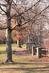 All in a row (epicDi) Tags: trees ontario canada fence spring niagara glen ontarioyourstodiscover
