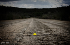 Theres still hope... (Roberto Bondia) Tags: road bridge flower primavera yellow dark puente hope spring carretera flor amarillo asfalto esperanza oscuro darktimes bondia robertobondia