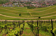 Vineyard in Spring - Korb, Baden-Württemberg, Germany (Batikart) Tags: road city urban panorama plant building green nature field grass lines rural canon germany landscape geotagged deutschland town vineyard spring flora europa europe pattern path strasse natur haus vine sunny line stadt april gras grün agriculture curve ursula sonnig landschaft muster grapevine weg frühling weinberg sander korb kurve g11 weinstock 2016 badenwürttemberg frühjahr 100faves 200faves 300faves batikart korberkopf canonpowershotg11