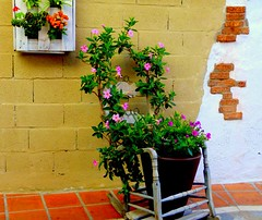 La mecedora (camus agp) Tags: espaa flores panasonic calles paredes marbella mecedora aceras casaana dipladenia fz150 callepeatonal jazminchileno