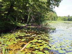 Water Lily Pond (BunnyHugger) Tags: pond flooding waterlily letterboxing greenville belding snakeyrun flatriverstategamearea