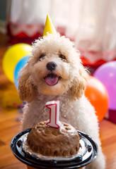 Birthday boy! (UGraphy) Tags: birthday dog pet cute puppy happy furry nemo adorable pooch