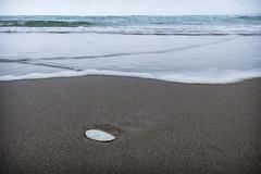 Seashell (haqiqimeraat) Tags: seascape shell nikon landscape scotland sea