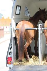 IMG_2883 (dreiwn) Tags: horse pony horseshow pferde pferd equestrian horseback reiten horseriding showjumping dressage reitturnier dressur reitsport dressyr ilsfeld dressuur ridingclub junioren ridingarena pferdesport springreiten reitplatz reitverein dressurreiten dressurpferd dressurprfung tamronsp70200f28divcusd jugentturnier