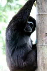 Brother (Milena Galizzi) Tags: park animal zoo monkey