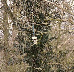 I think this could be the Husband ? (Bogger3.) Tags: skeleton drums woods head hanging shaking sunnyday spookey goodteeth coth canon600d