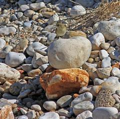 Piedras (vic_206) Tags: piedras canoneos7d