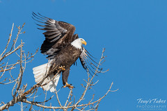 Bald Eagle launch sequence - 2 of 8