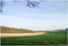 langs de bosrand (7D024410) (Hetwie) Tags: trees bomen forrest nederland bos lente weiland bergendal gelderland bossen bosrand duivelsberg