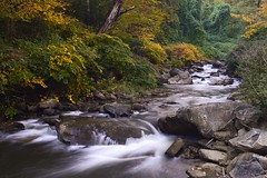 Small creek in the New River Gorge National River, West Virginia (jkrieger84) Tags: fall nature water landscape nikon stream westvirginia newrivergorge d600
