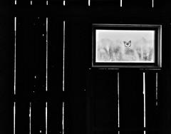 27/ windows & doors ~the sequel~ (s@ssyl@ssy) Tags: bw window barn butterfly sticker hss windowdecal nextdoorneighbours sliderssunday